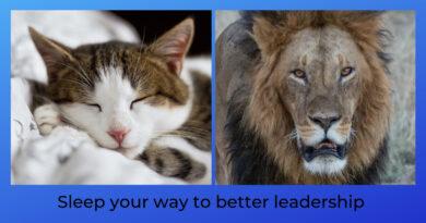 sleeping kitten and lion